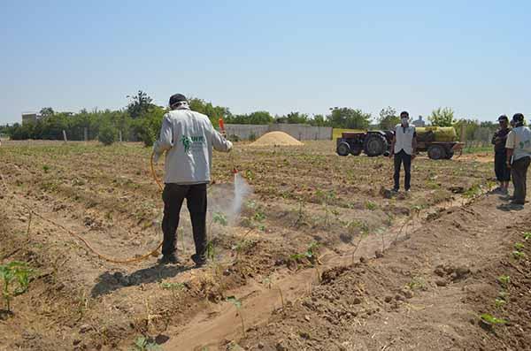 مشروع المنح الزراعية (غوطة شرقية)Home